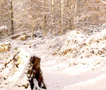 Winterspaziergang (Naturwaldreservat Lothar)