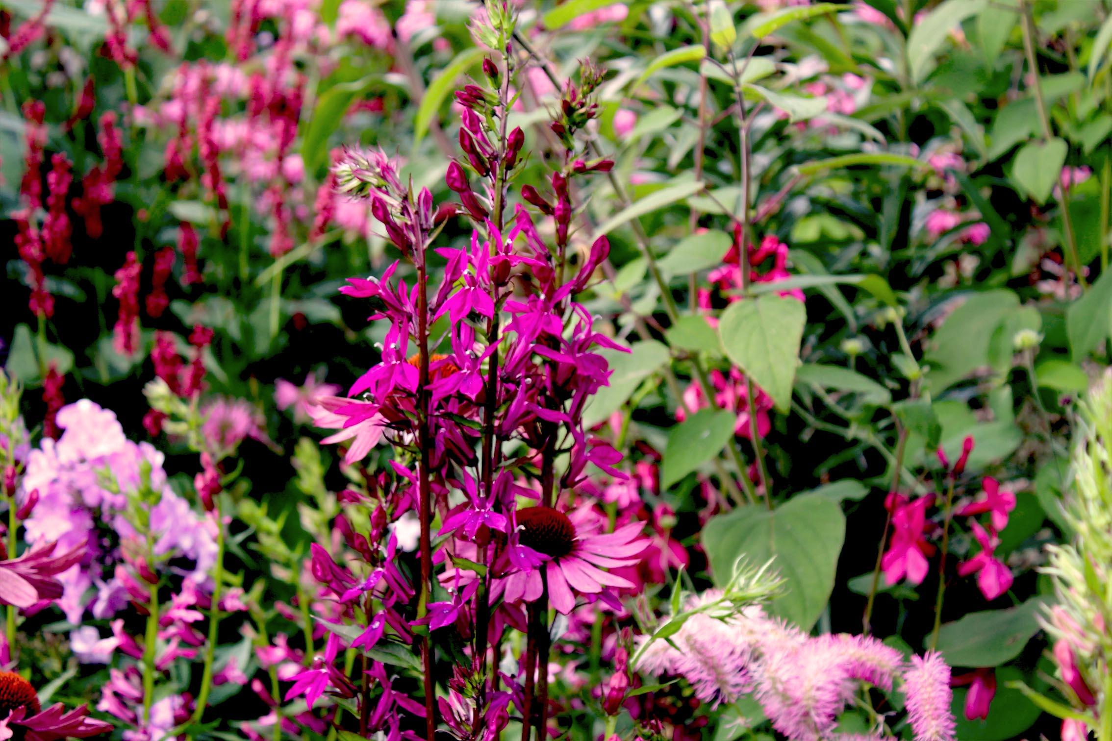 Cottage Garten Die 10 Besten Tipps Irislandschaftench