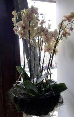 11-04-2017 Keukenhof (77) (Medium)