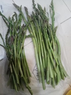 Asparagus stalks harvested for eating