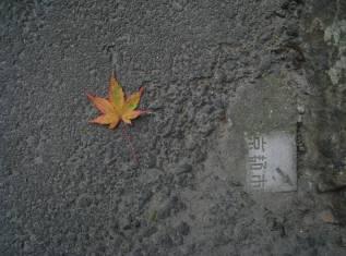 Maple Leaf in Ota