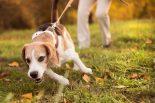 5 psiaków zabitych przez truciznę umyślnie włożoną do mięsa