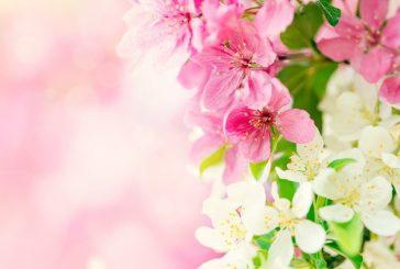 Wiosna zbliża się dużymi krokami!