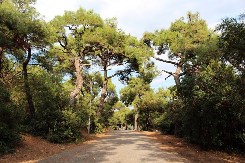 Pine Alley   The Prince Islands: how to get, places to see, things to do