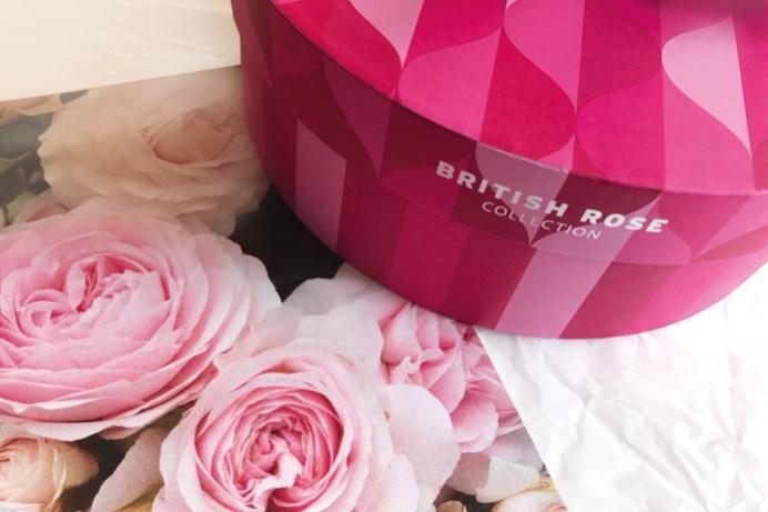 Britisch Rose