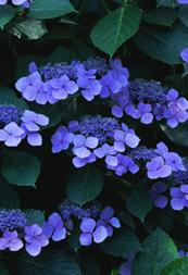 紫色が雅な和サイト10選