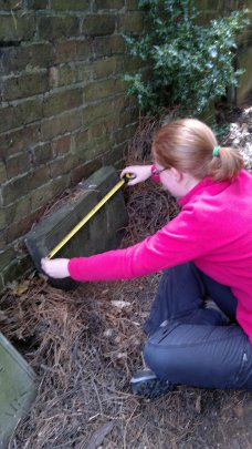 IAVG member taking measurement of Quaker grave slab