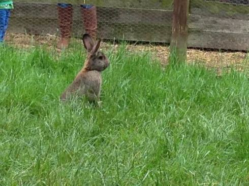 Rabbit at Windmill Hill City Farm, Bristol