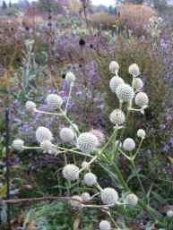 RHS Wisley Surrey James Hitchmough's meadow