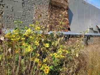 Prairie style Planting Highline New York