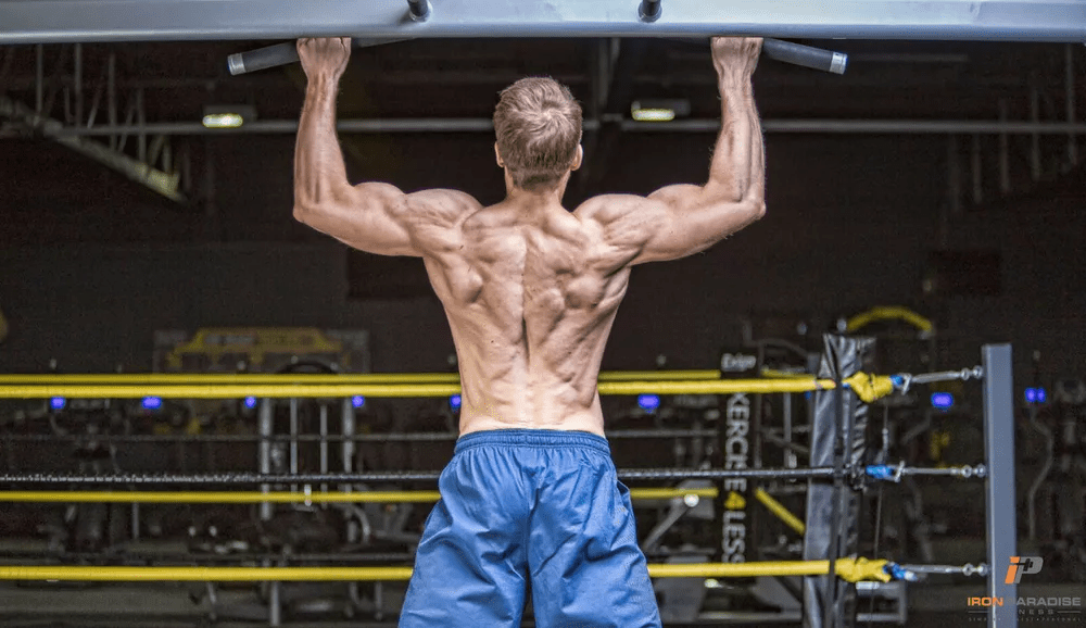 The Best Way To Train All 5 Major Muscle Groups Iron Paradise Fitness