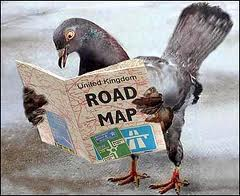 ironman accommodations  -pigeon looking at a road map