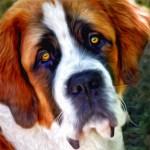 St Bernard Dog Painting