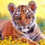 Tiger Baby Cub Photo Paint
