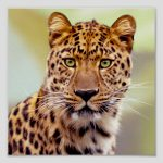 Leopard Photograph Prints on Products