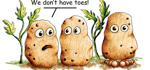 Funny Potatoe Pun T-Shirts and Products