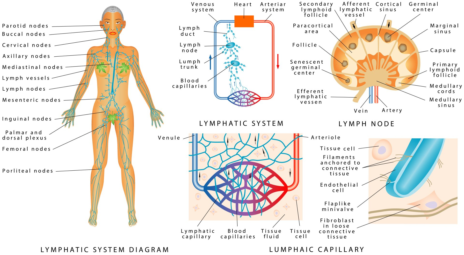 Medicupping Lymphatic Drainage In Jackson Tn I New