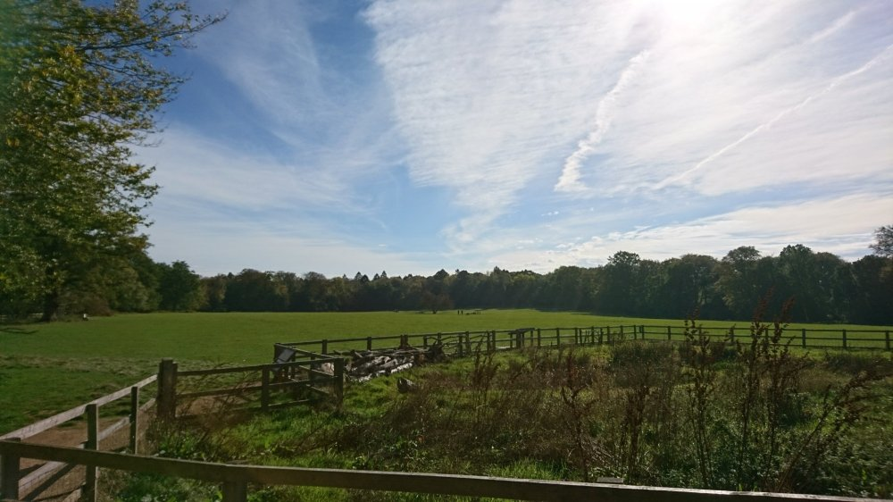 The meadow at Ashridge