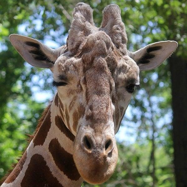 Zoo Light Safari