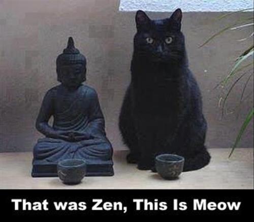 597ff7f3330a7 O gato é uma chance de interiorização e sabedoria