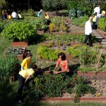 Garden Workshop: Veggie Gardens