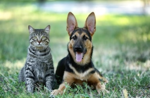 August 17th:  Clear the Shelters at Irvine Animal Care Center