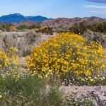 UCI Report Reveals that Climate Change is Killing Off Native Plants