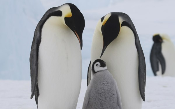 January 16th:  Learn about Antarctica Penguins Expedition
