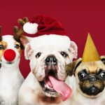 Open Your Home & Your Heart this Holiday Season:  Adopt a Pet