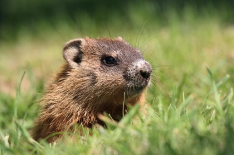 Let's Learn About Groundhog Day