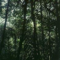amazonas-sekundärurwald