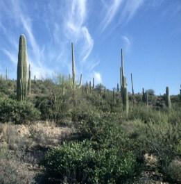 Nationalpark bei Tucson 1983