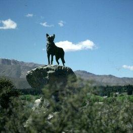 neuseeland-christchurch-tekapo hirtenhund 2001