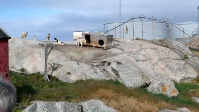 Grönland-arbeitslose Schlittenhunde 2007