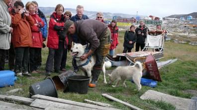 Grönland-deutscher Hundezüchter 2007