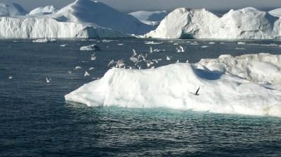 Grönland-Vogelgruppe am Reiseende 2007
