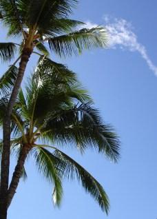 hawaii-Palmen- nationales Symbol 008