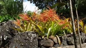 hawaii-im botanischen Park 054