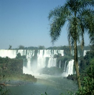 iguazu-falls-palme
