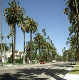 los-angeles-palmenallee-1
