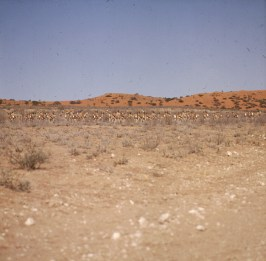 namibia-Gemsbock N.P.1987