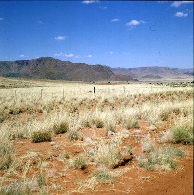 Namibia Silbergras vor Sossusvlei 1987