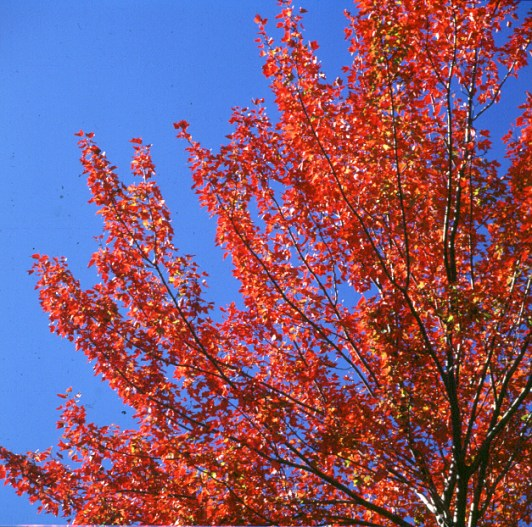 new-hampshire-Foliage in voller Pracht