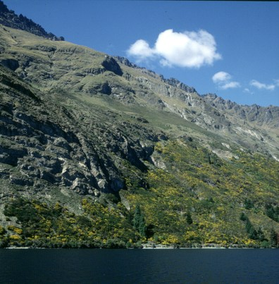 neuseeland-queenstown-ginsterufer 2001