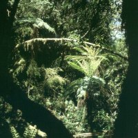 auckland- urwald 2001