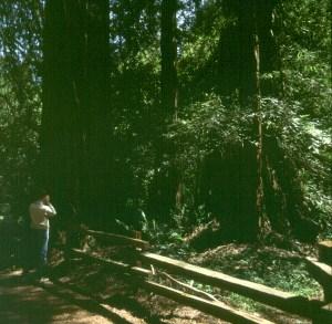 san-francisco-nils redwood park