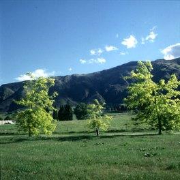 neuseeland-stewart-island-dreibaum 2001