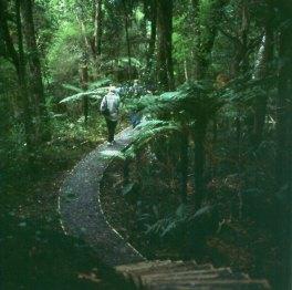 neuseeland-stewart-island-urwaldweg