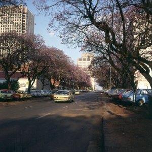 Suedafrika-Jacarandablüte in Pretoria 1980