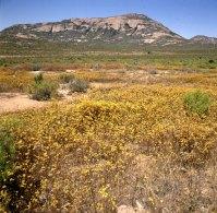 Suedafrika-Oranje Blütenmeer 1987